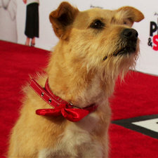 'Mr. Peabody & Sherman' Holly-WOOF premiere